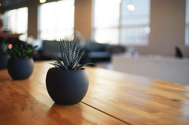 Jakie rośliny doniczkowe w domu?