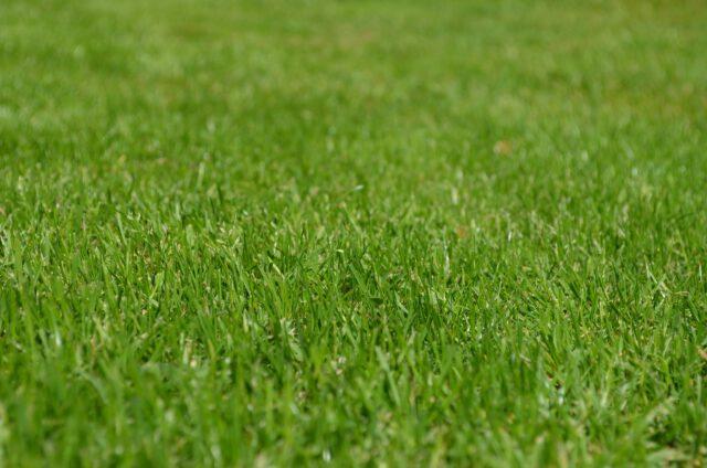 Kiedy i jak nawozić trawnik?